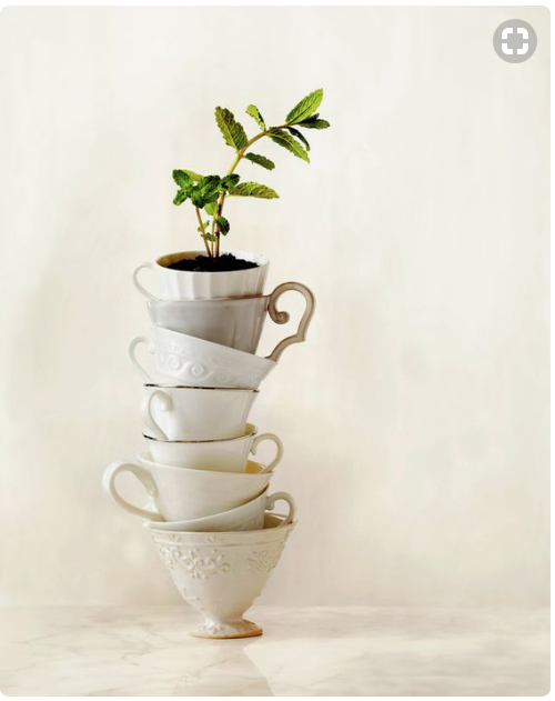 Product Photography- tea cups with a plant